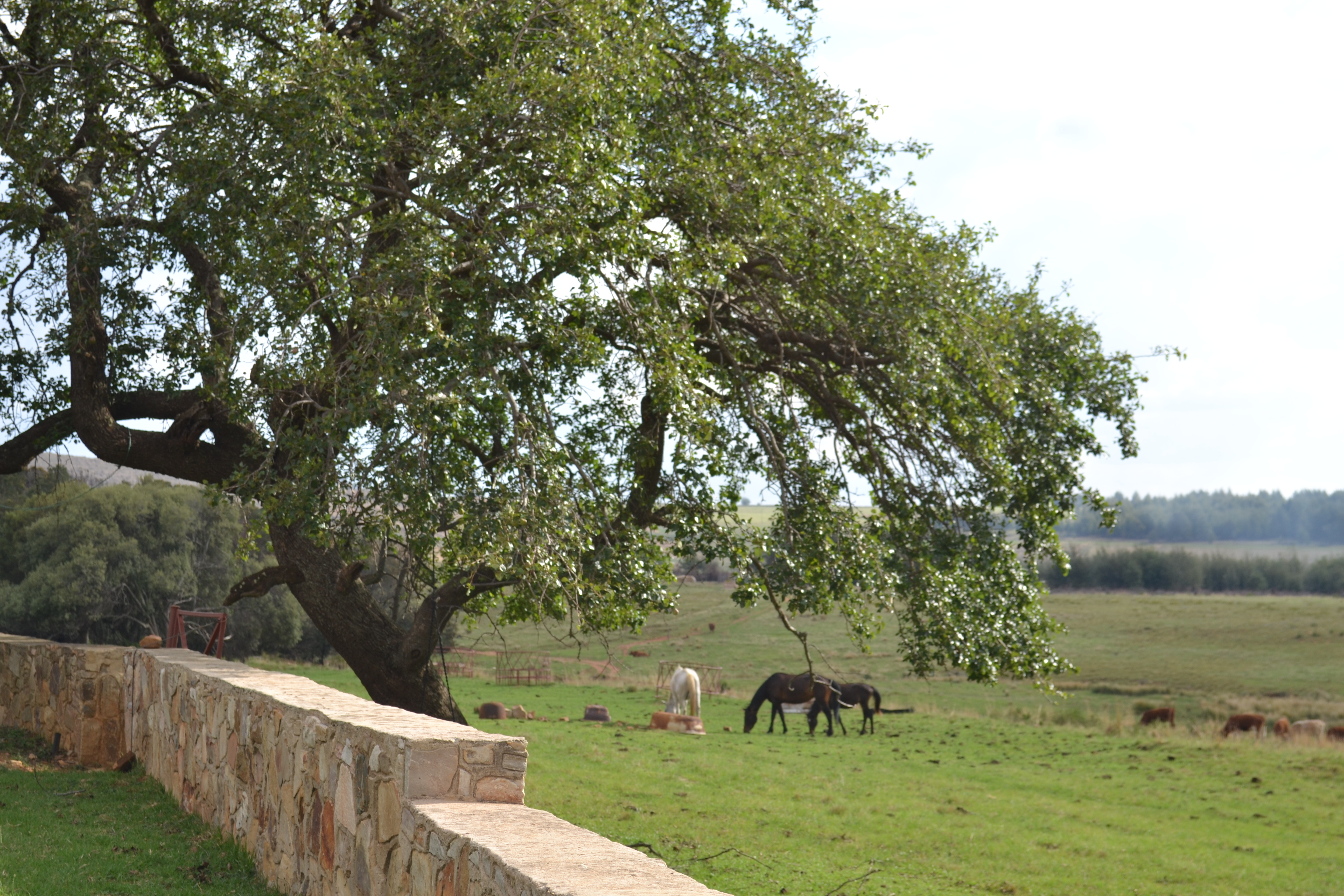 crimson-creek-cherry-farm-dullstroom-2