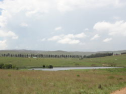 Teal and Trout Estate Dullstroom