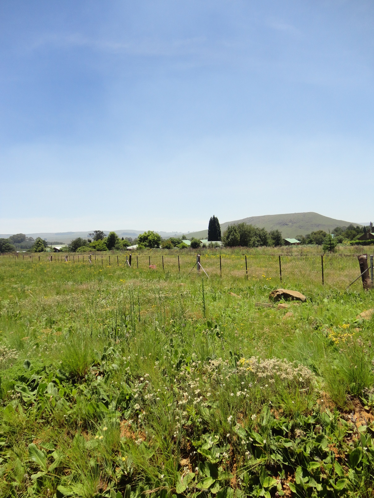 ZS208_-_Stand_In_Dullstroom_For_Sale__1_