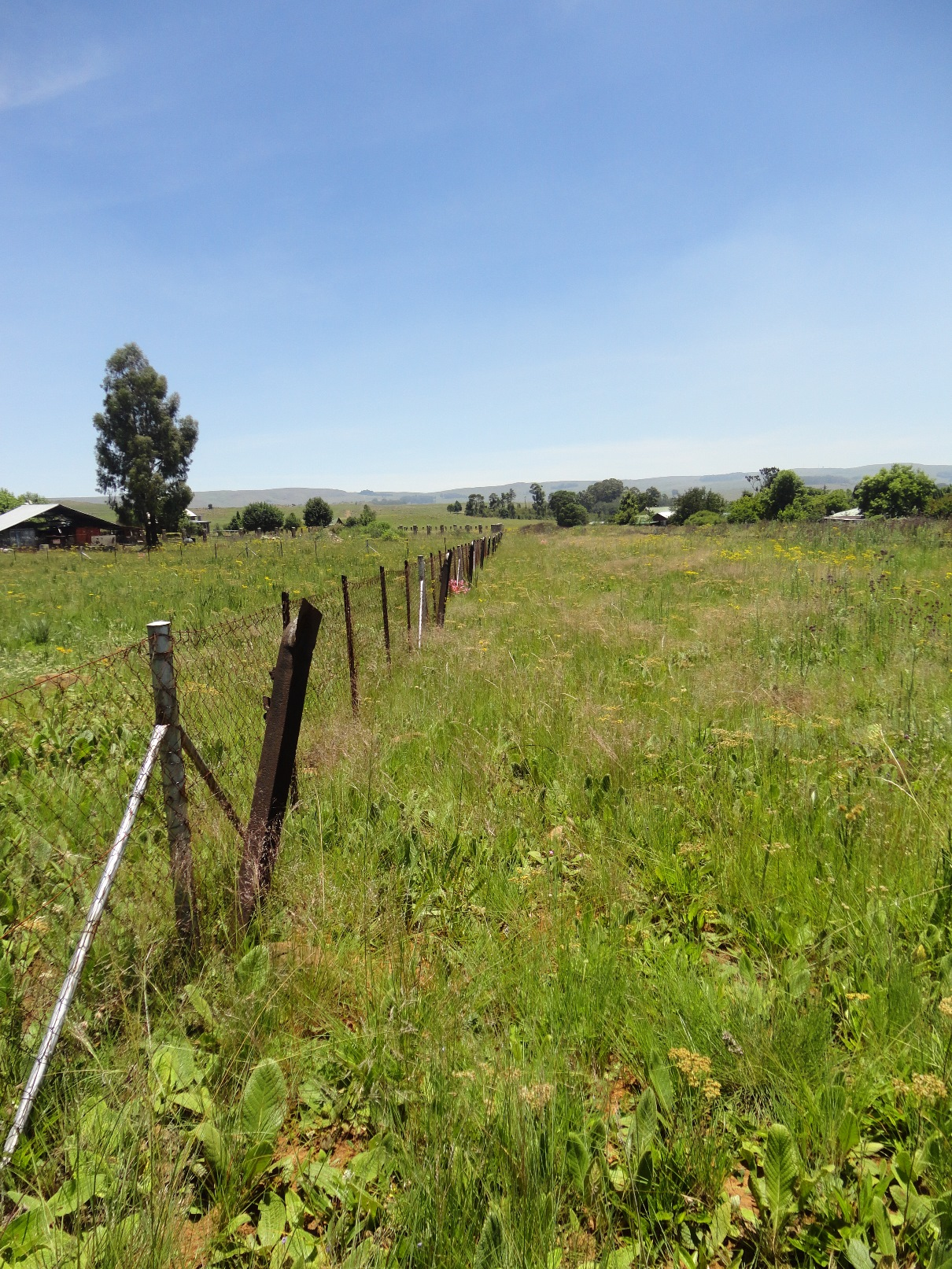 ZS208_-_Stand_In_Dullstroom_For_Sale__2_