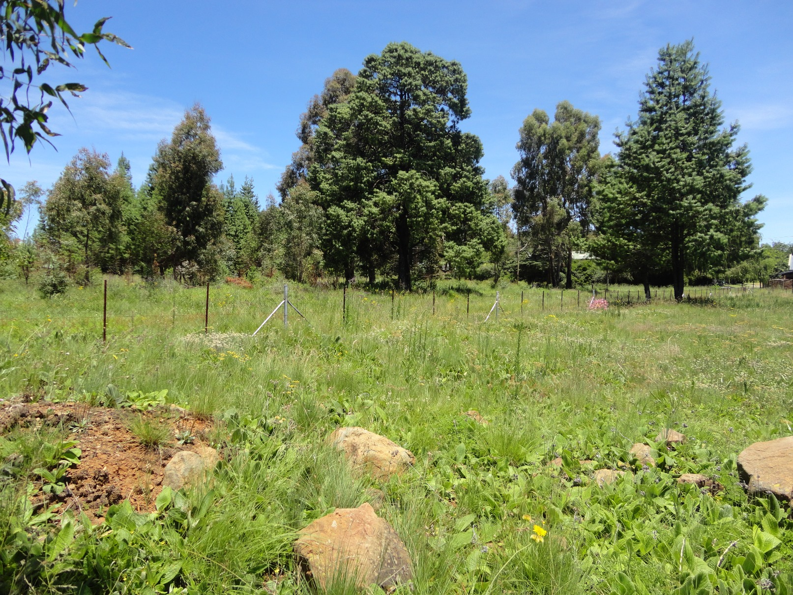 ZS208_-_Stand_In_Dullstroom_For_Sale__3_