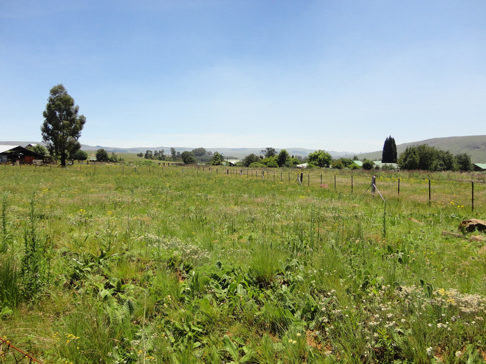 ZS208_-_Stand_In_Dullstroom_For_Sale__5_